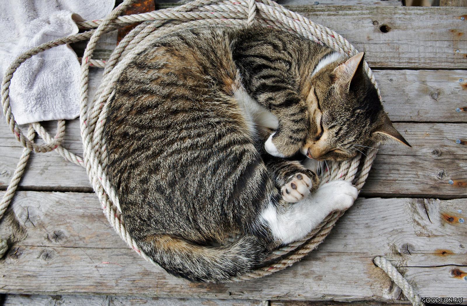 Спать и еще раз спать! (V.2)