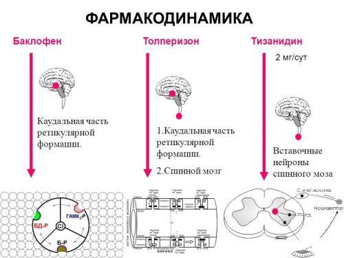 Фармакодинамика Тизанидина и аналогов