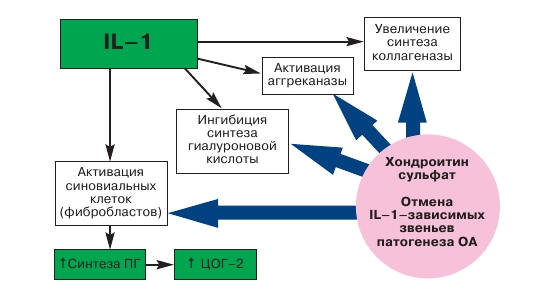 Функции хондроитина сульфата