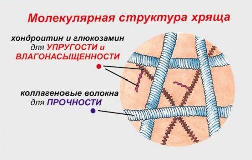 Хондратин и глюкозамин в струткуре хряща