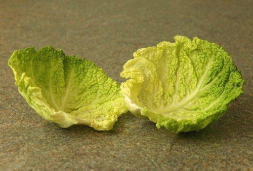 Лечение капустным листом