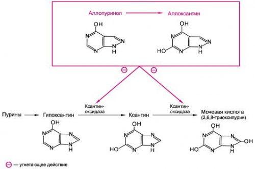 Локализация действия Аллопуринола