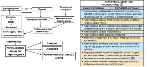 Механизм действия Лефлуномида