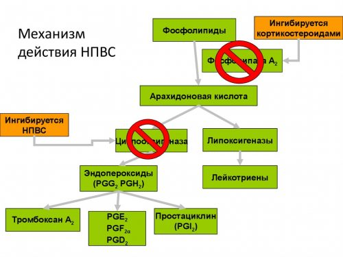 Механизм действия НПВС средств