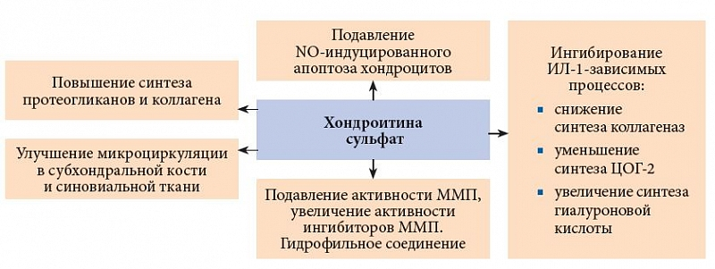 Механизм действия хондроитина сульфата