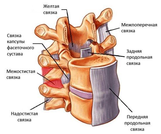 Межостистый лигаментит