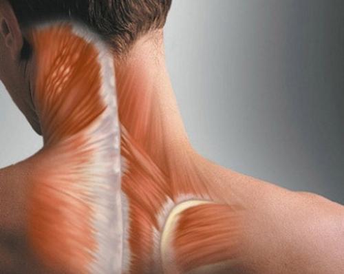 Появление миозита шеи