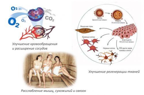 Польза бани для организма
