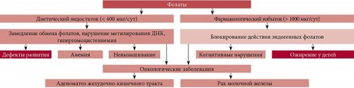 Проявления дефицита и избытка потребления фолиевой кислоты