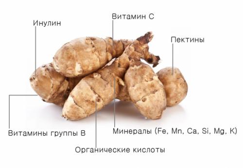Состав клубней топинамбура