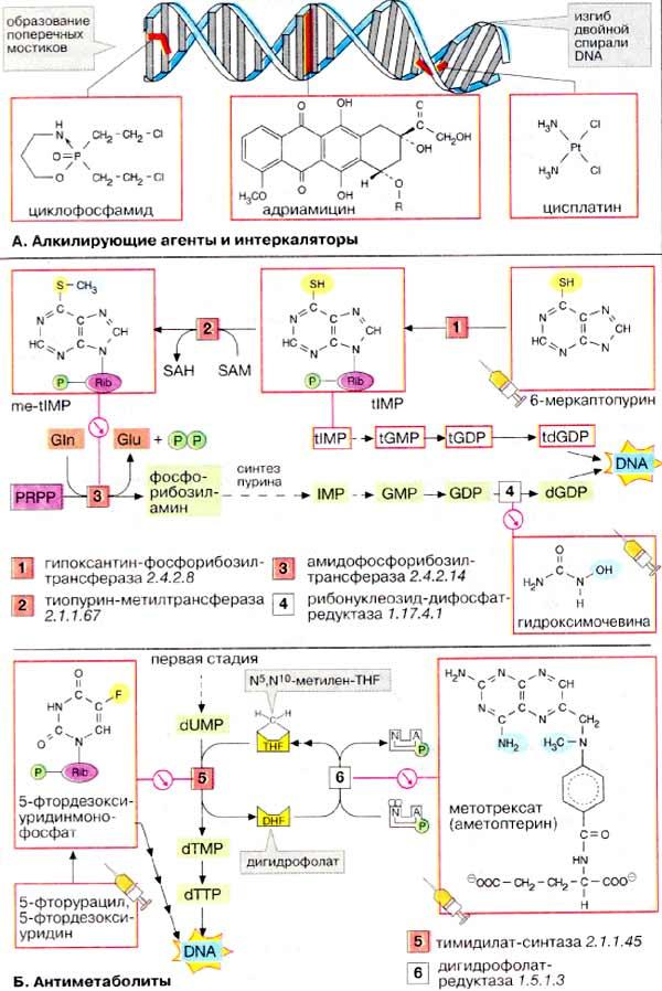 Перпараты - цитостатики