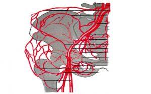 Улучшение кровотока тазобедренного сустава при помощи массажа