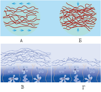 Восстановление ткани хряща при помощи хондропротекторов