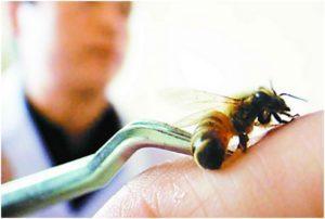Профессиональное лечение пчелиным ядом