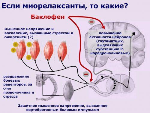 Действие Баклофена