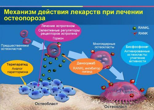 Действие лекарств при остеопорозе
