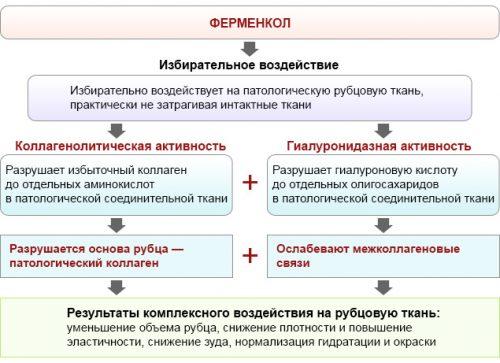 Действие Ферменкола
