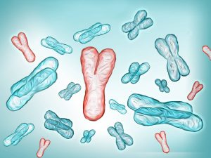 Генетическая причина брахидактилии