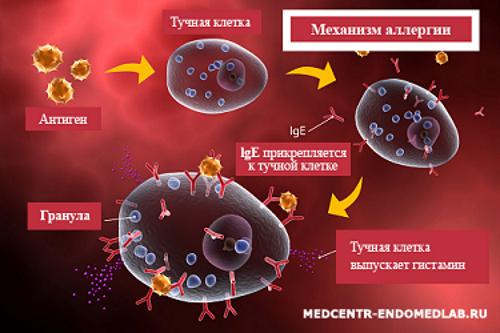 Гистамин — провокатор аллергии