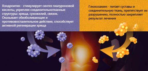 Польза хондроитина и глюкозамина