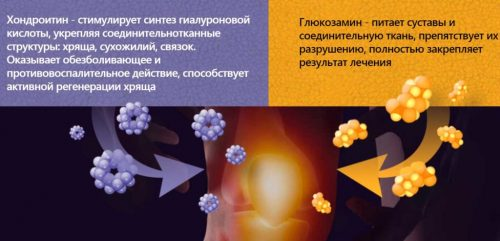 Свойства хондроитина и глюкозамина