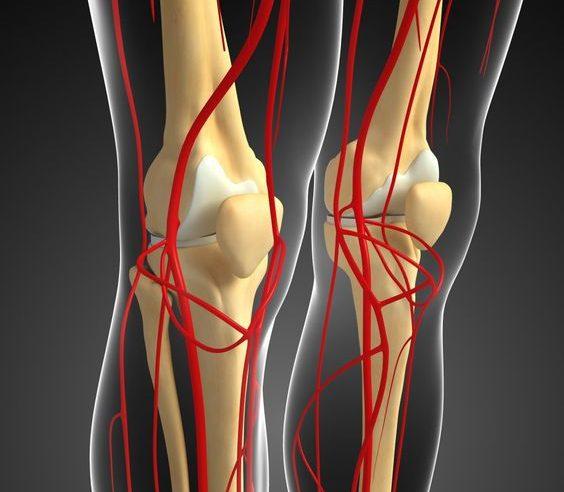Улучшение кровообращения колена