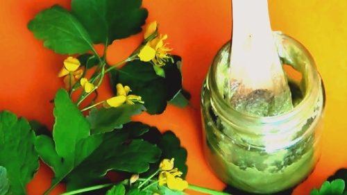 Мазь из сока чистотела и вазелина