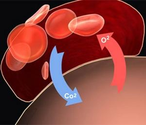 Нормализация кровообращения