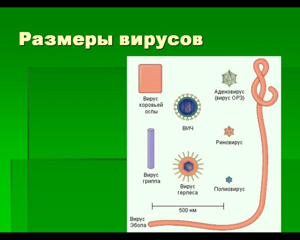Размер вируса гриппа