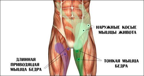Паховые мышцы