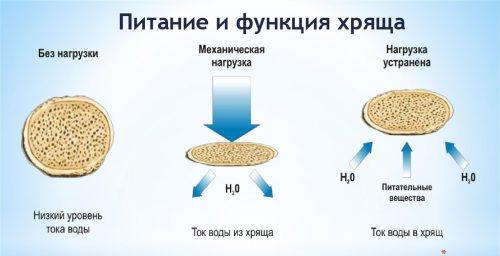 Питание хряща при помощи хондропротекторов