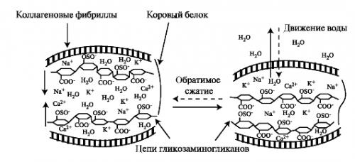 Питание хрящевой ткани микроэлементами