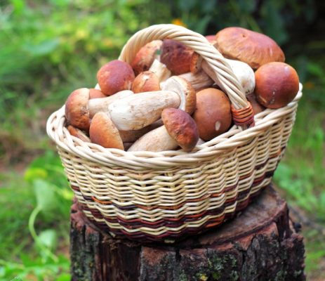 Противопоказание белых грибов при подагре