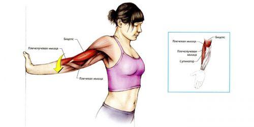 Растяжение мышц рук