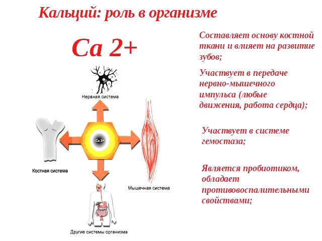 Роль кальция для организма