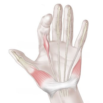 Щелкающий палец