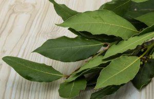 Свежие лавровые листья