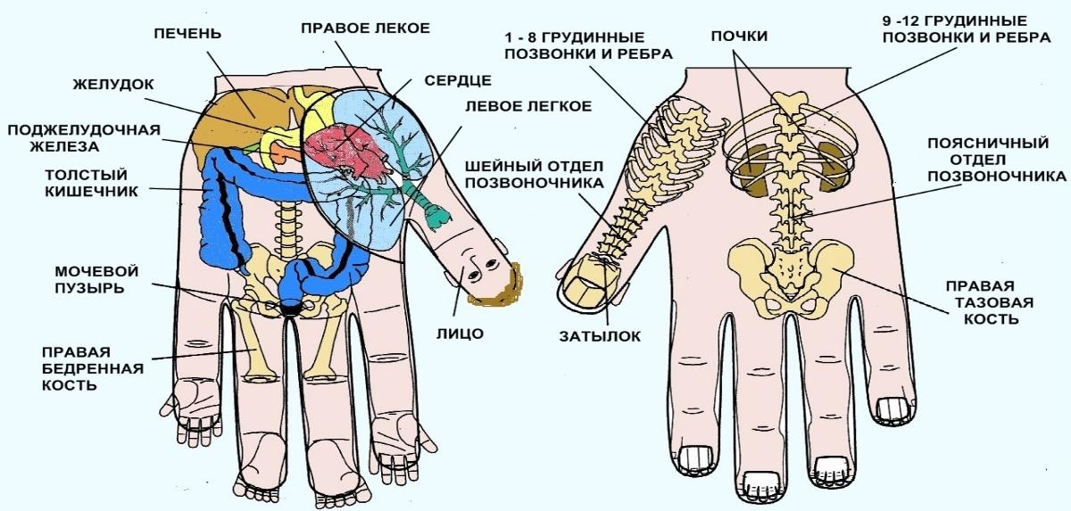 Точки на руке, отвечающие за органы