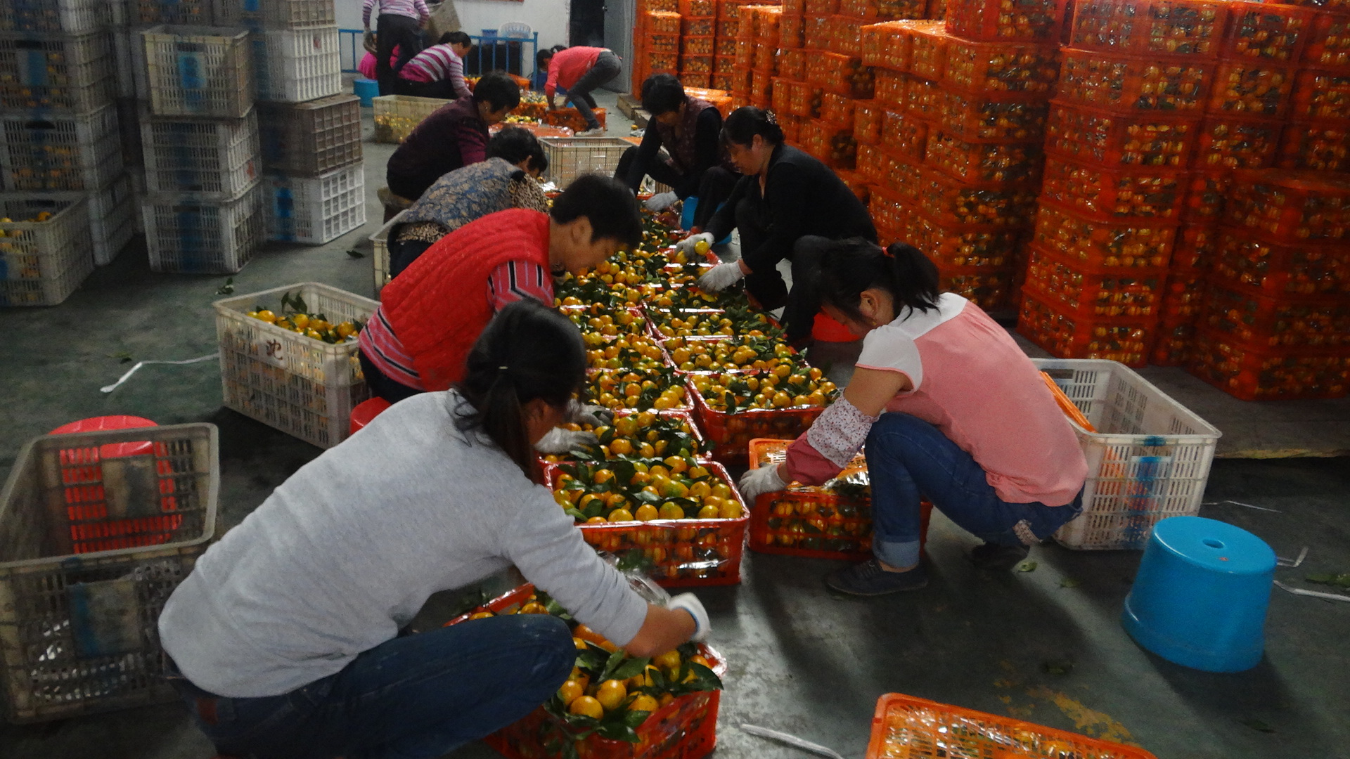 Могут ли мандарины являться переносчиками гриппа?
