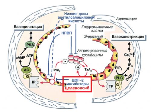 Механизм действия Целекоксиба