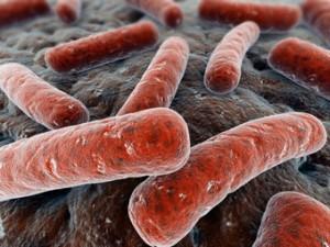 Туберкулезная палочка — возбудитель туберкулёзного артрита