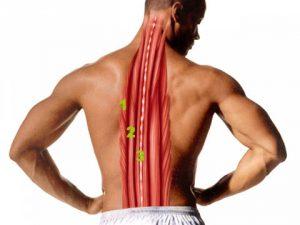 Укрепление тонуса спины при помощи гимнастики