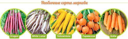 Виды моркови