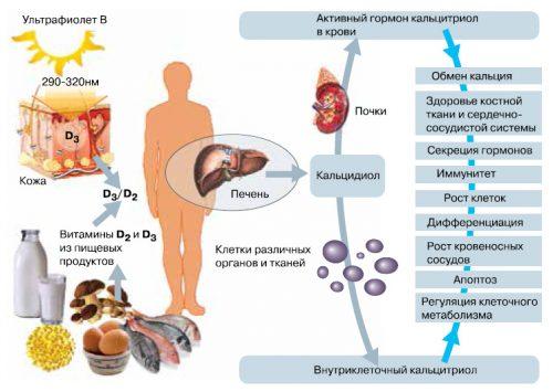 Влияние витамина Д