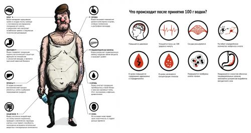 Вред водки для организма